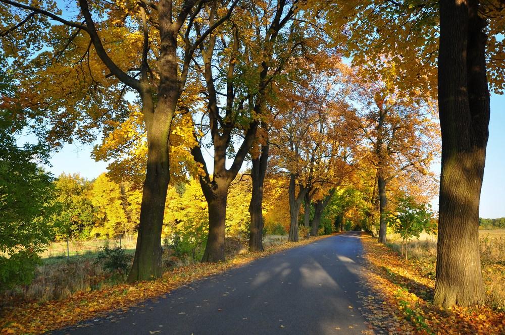 Herbst-Allee.....