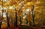 Herbst Allee.......