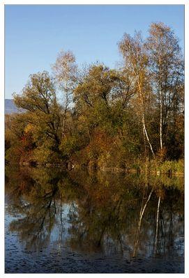 Herbst am Alten Rhein