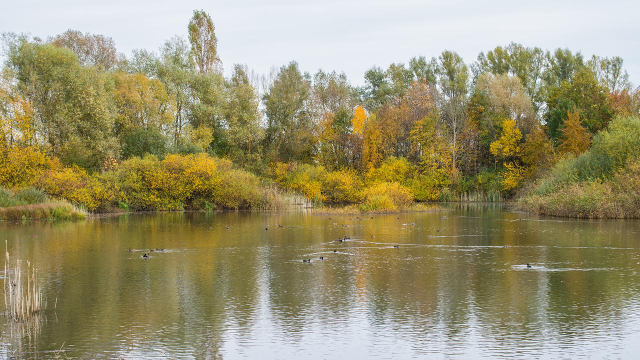 Herbst am Altmühlsee