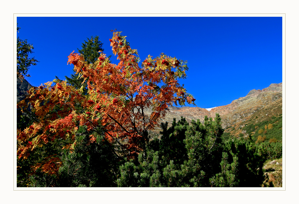 Herbst am Berg