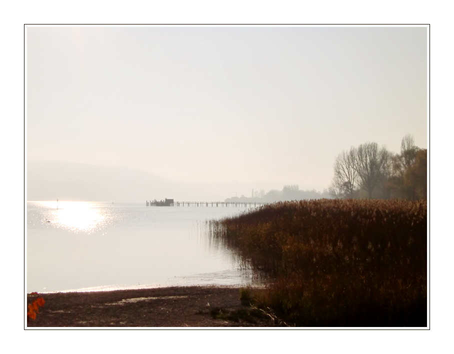 Herbst am Bodensee (2)