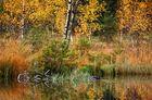 Herbst am Buhlbachsee