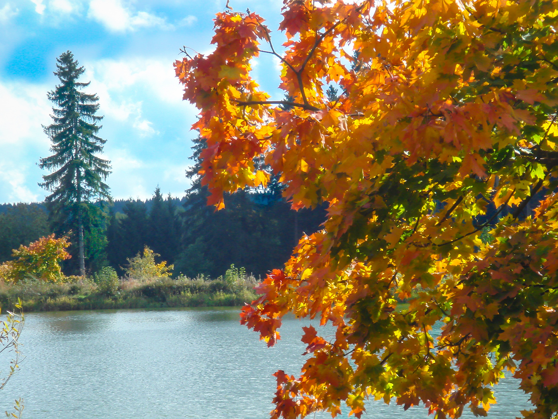 Herbst am Harzer Wasserregal