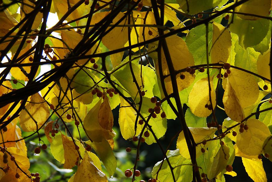 Herbst am Heiligen See in Potsdam, 04.10.09 – 02