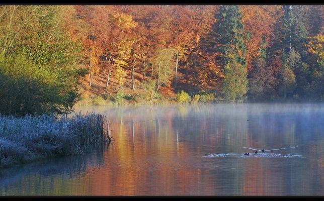 Herbst am Holzmaar