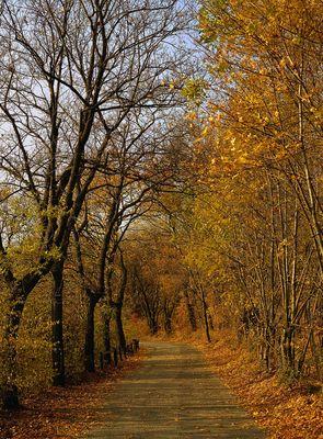 Herbst am Kahlenberg
