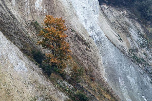 Herbst am Kreidefelsen