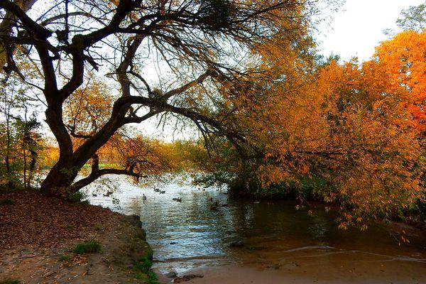 Herbst am Main - idyllisch