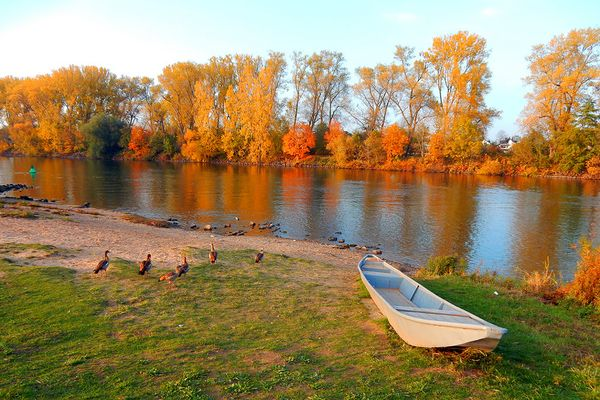 Herbst am Main - quietschbunt