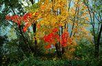 Herbst am Mittelrhein