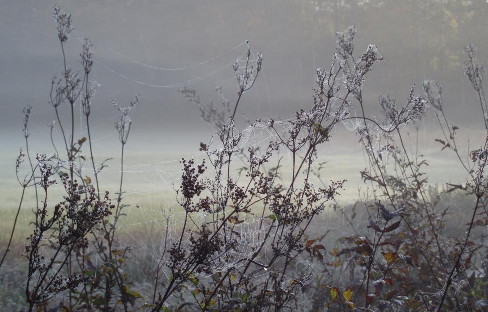 Herbst - Am Morgen