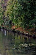 Herbst am  Neckar Ufer