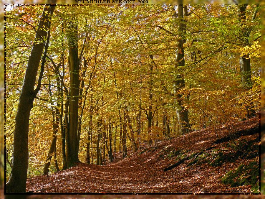 Herbst am Neumühler See