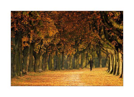 Herbst am Rheindamm