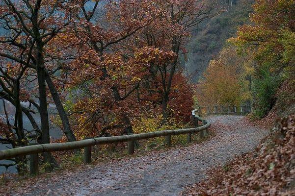 Herbst am Rursee II