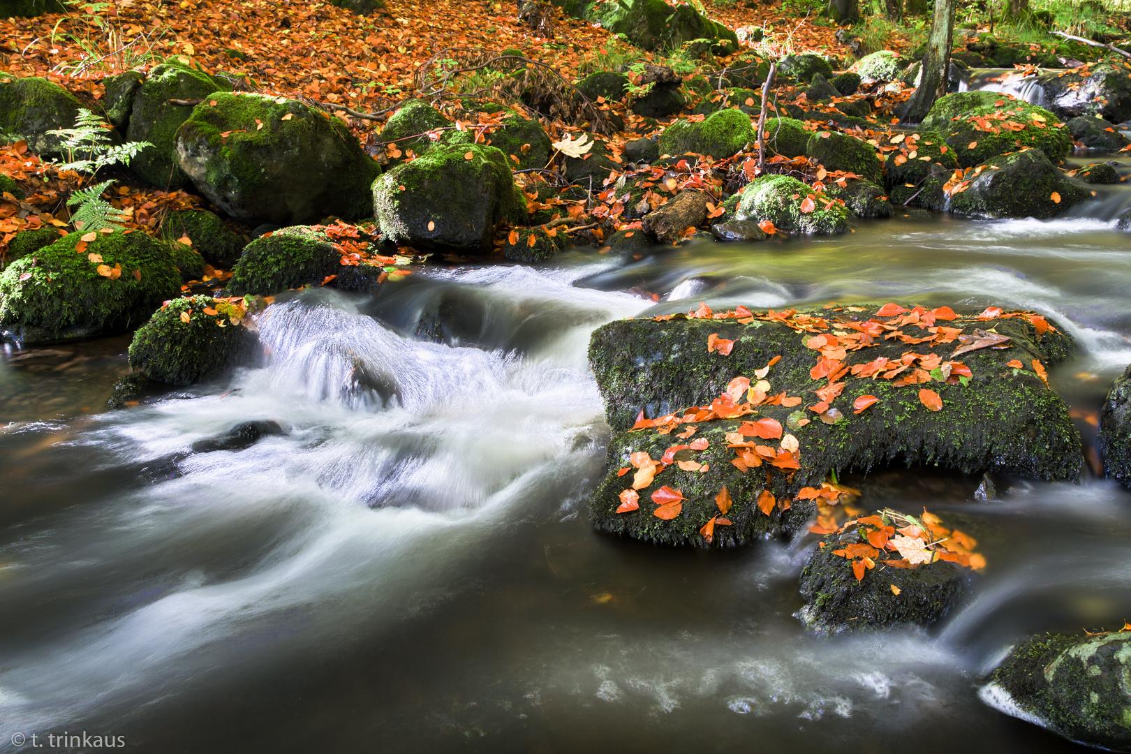 Herbst am Schwarzbach