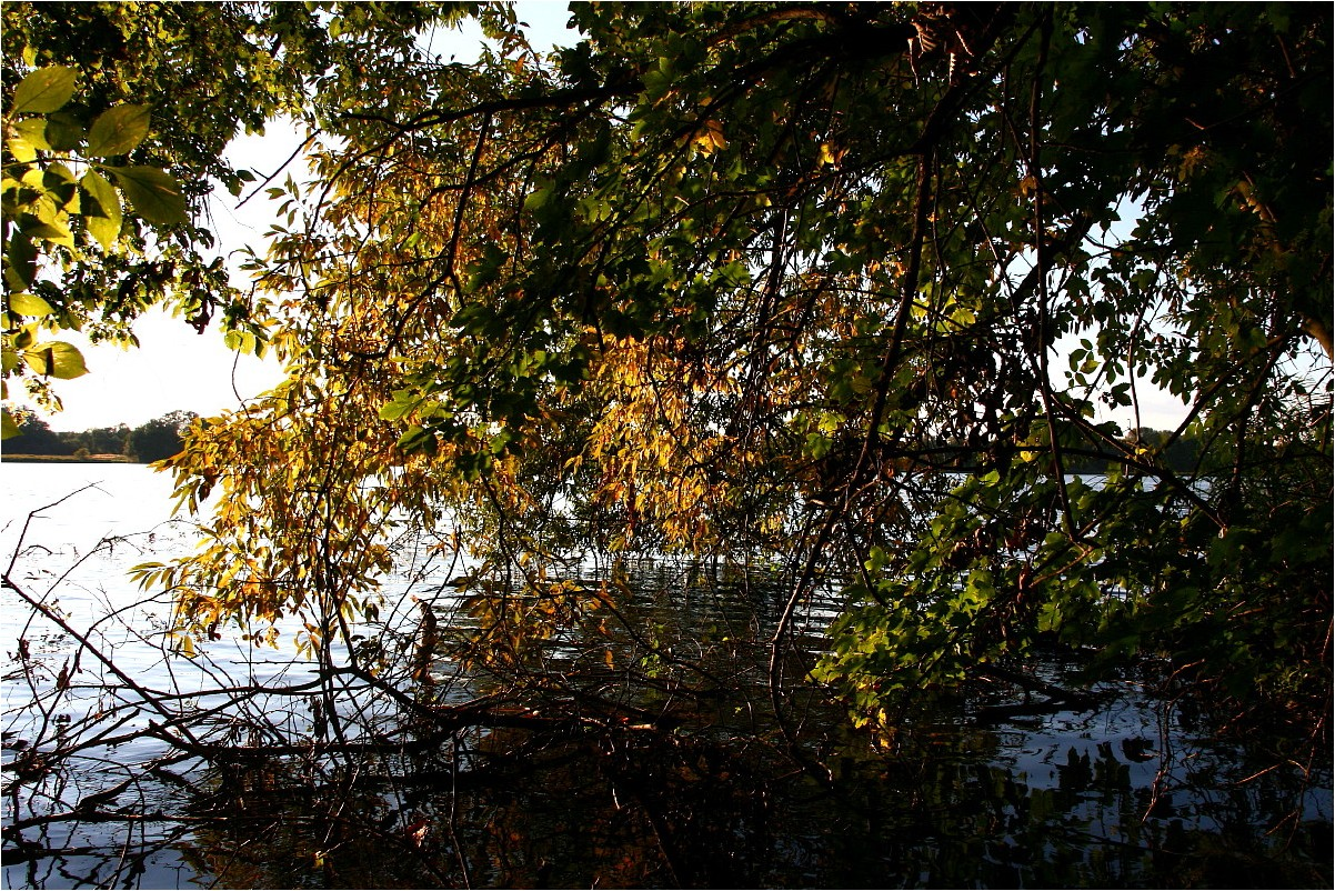 Herbst am See (1)