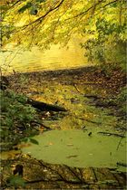 Herbst am See (5)