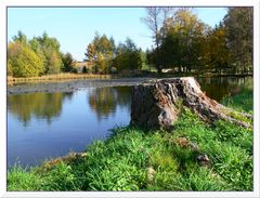 Herbst am Seerosenteich