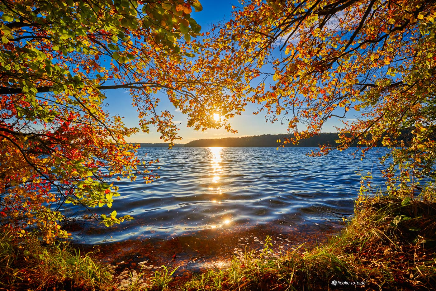 Herbst am Stechlinsee