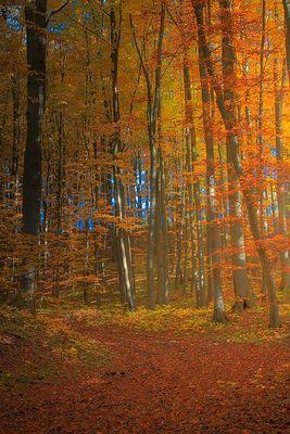 Herbst am Steinberg