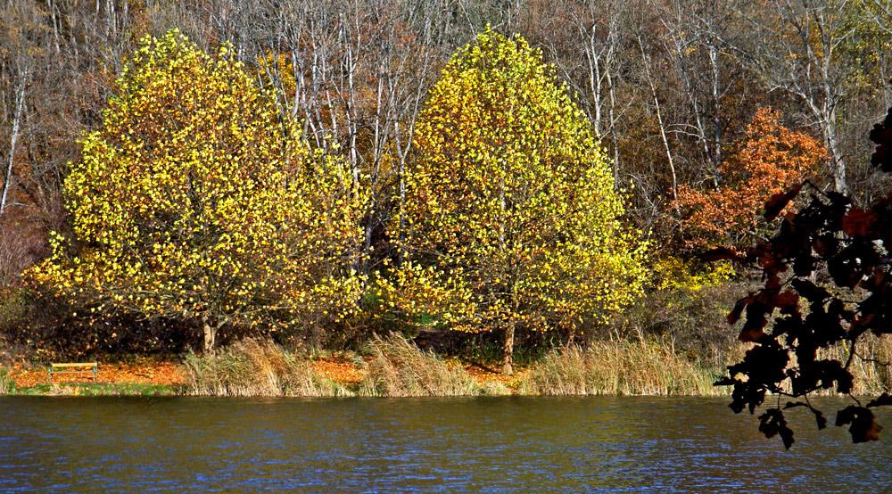 Herbst am Thalersee