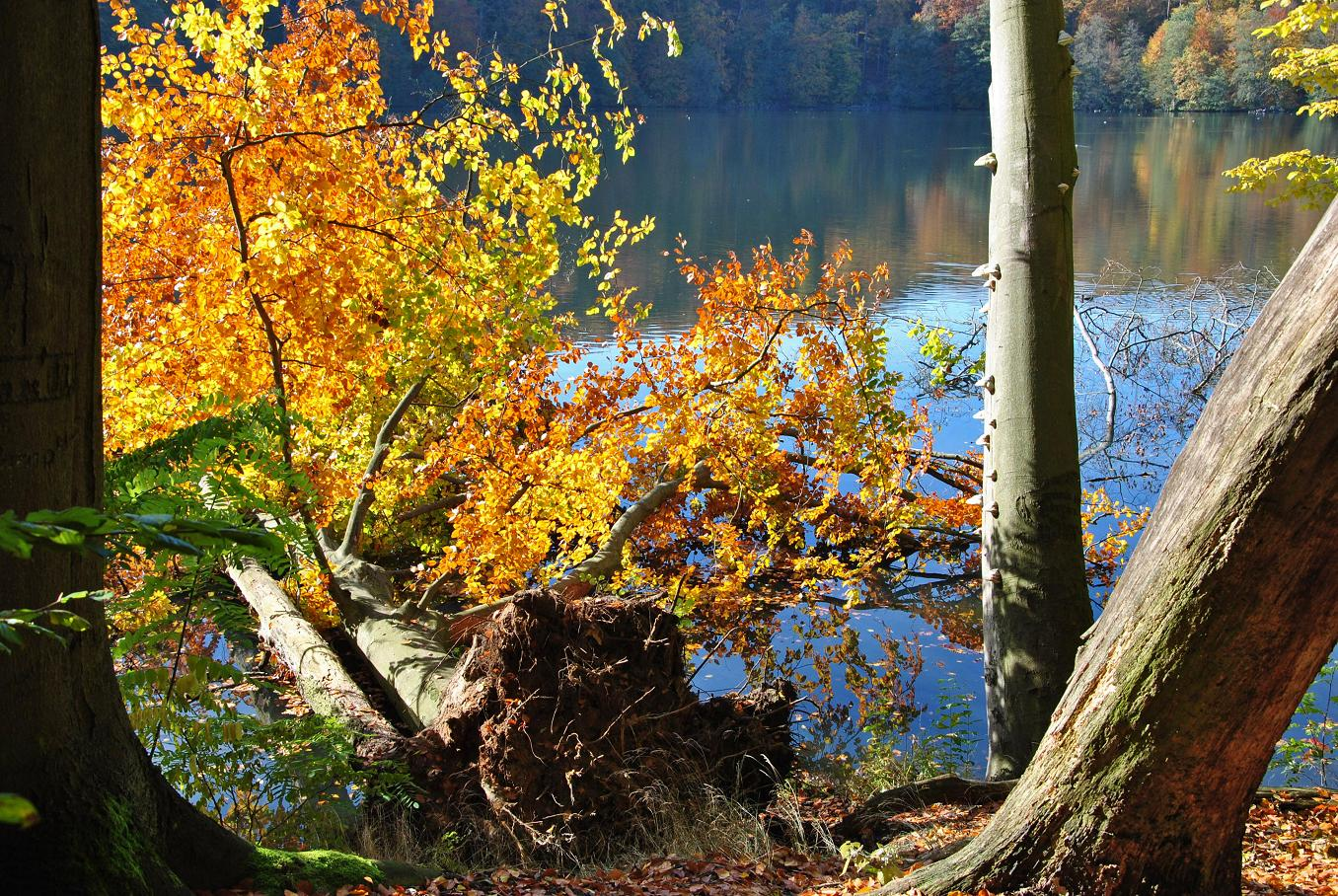 Herbst am Treppelsee