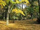 Herbst am Tümpel