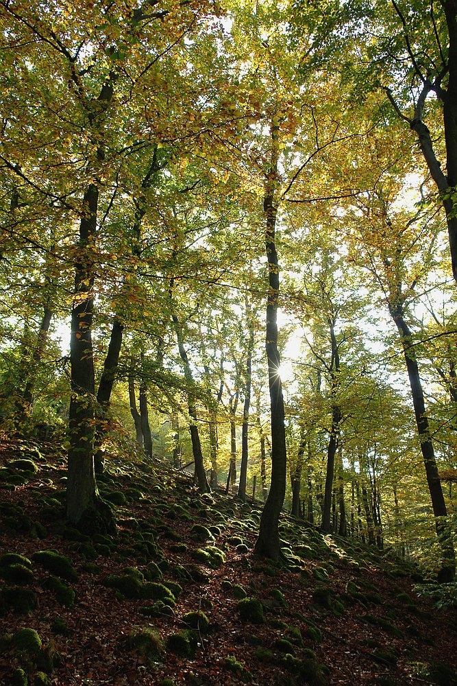Herbst am Urwaldsteig