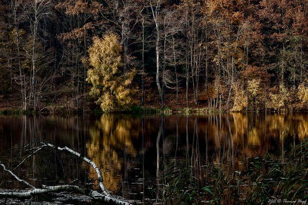 Herbst, am Weiher ... nochmal in Farbe