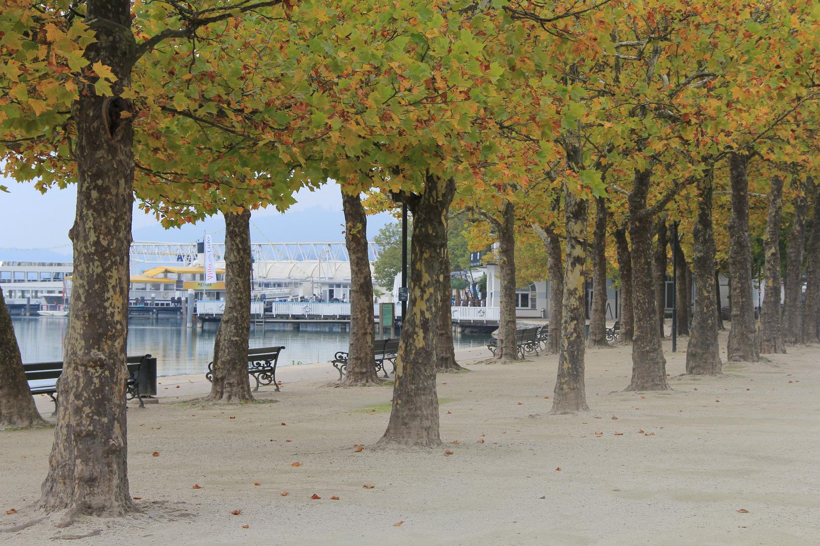 Herbst am Wörthersee