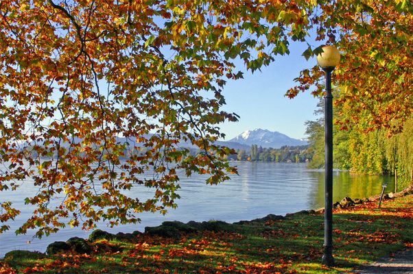 Herbst am Zugersee