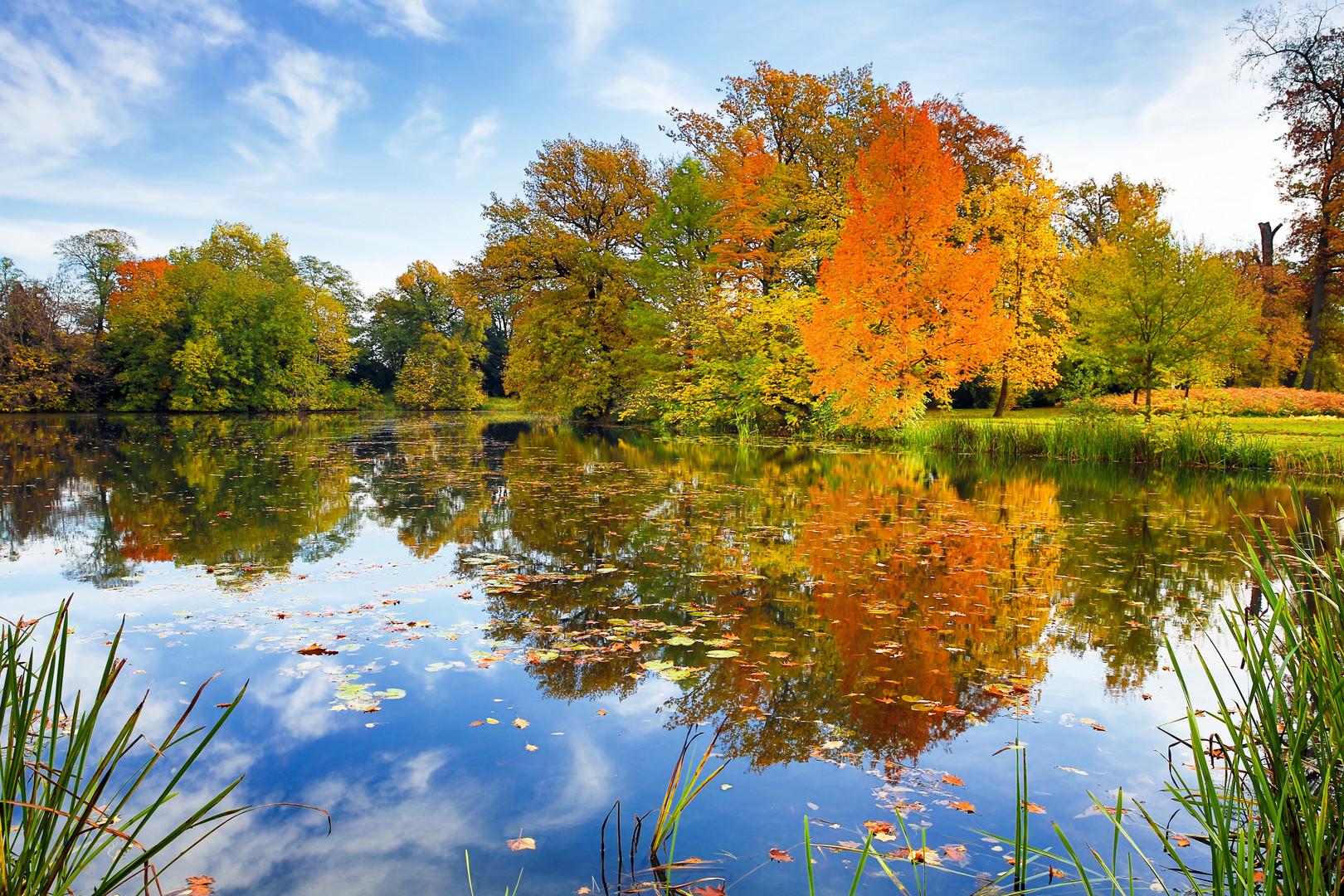 Herbst amTeich