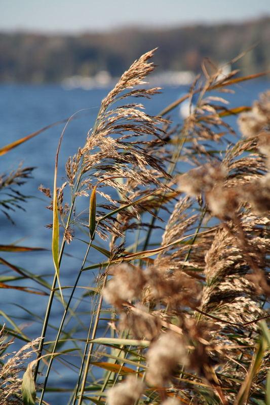 Herbst an der Havel