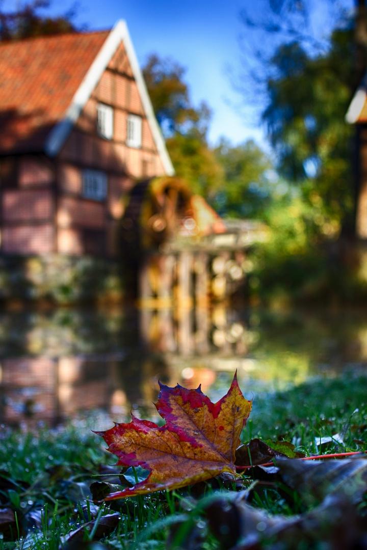 Herbst an der Mühle Bruneforth