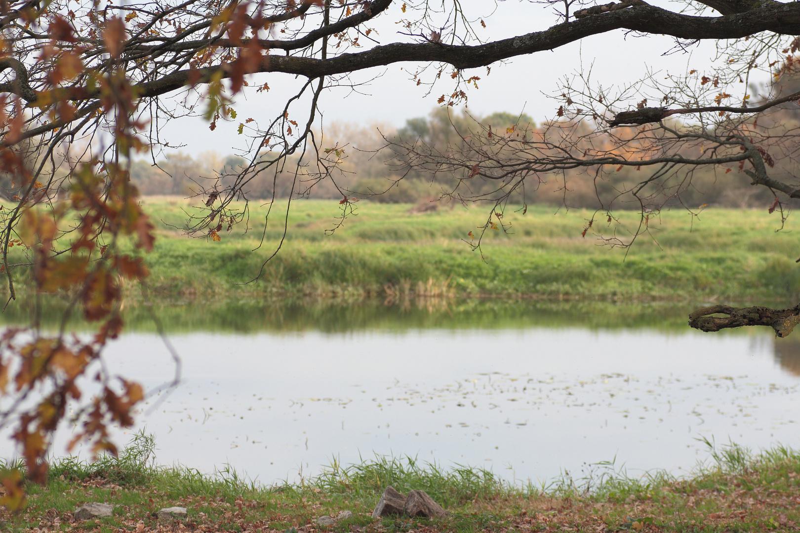 Herbst an der Oder