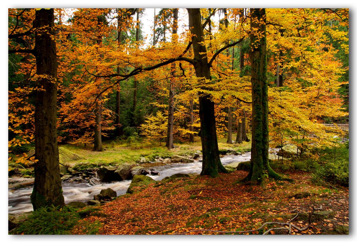 Herbst an der Schwarzen Pockau