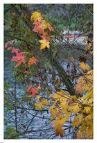 Herbst an der Sieg....