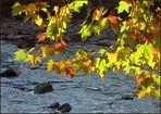 Herbst an der Sihl