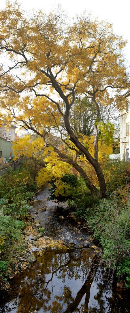 Herbst an der Wieseck