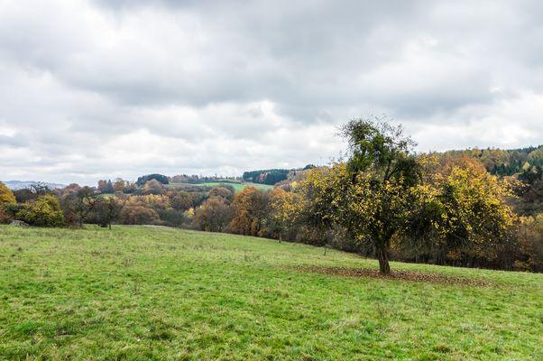 Herbst auf dem Ottweiler Flur (Saarland)