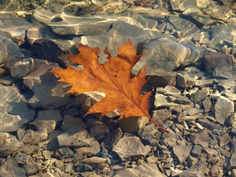 Herbst auf dem See