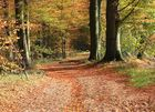 Herbst auf dem Waldweg