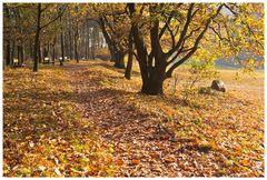 Herbst auf dem Weyerberg