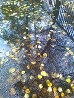 Herbst auf den Bürgersteigen von Berlin