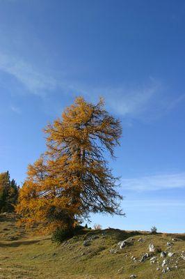 Herbst auf der Alm
