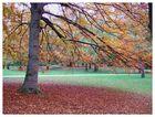 Herbst auf der Isarinsel
