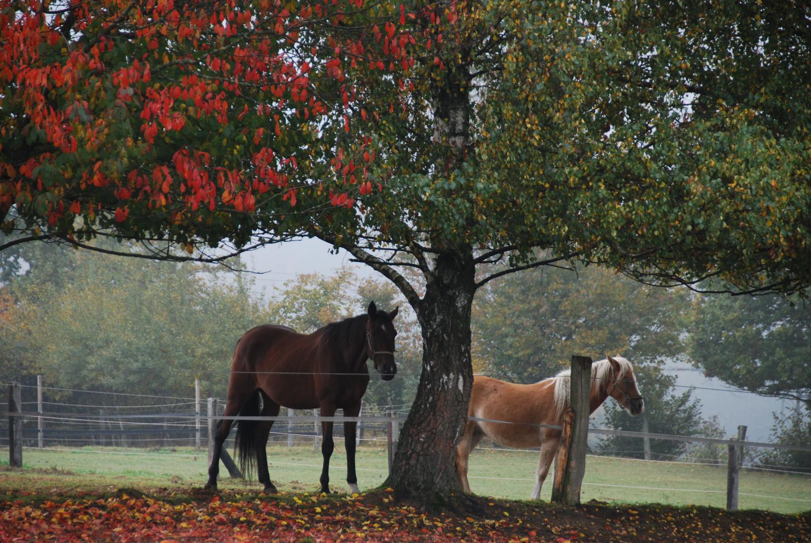 Herbst auf der Koppel