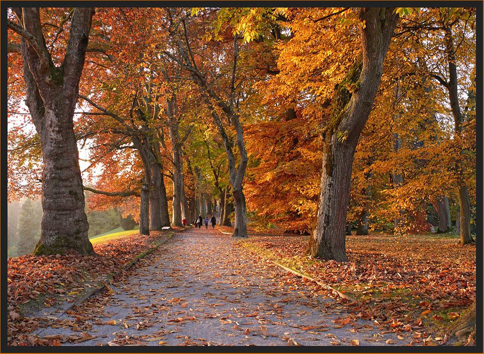 Herbst auf der Mainau 2